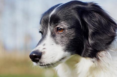 pensive dog
