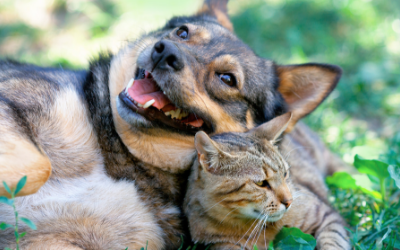 image for Pet Diabetes